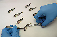 - Padova, Experimental Zooprofilattic Institute of the Venezie, laboratory of fish pathology ....- Padova, Istituto Zooprofilattico Sperimentale delle Venezie, laboratorio di patologia ittica