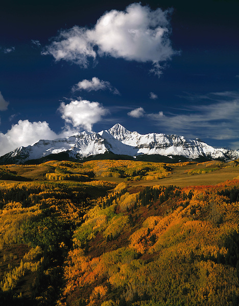 Autumn aspen trees and Wilson Peak (14017 feet), San Juan Mountains, Telluride, Colorado, USA