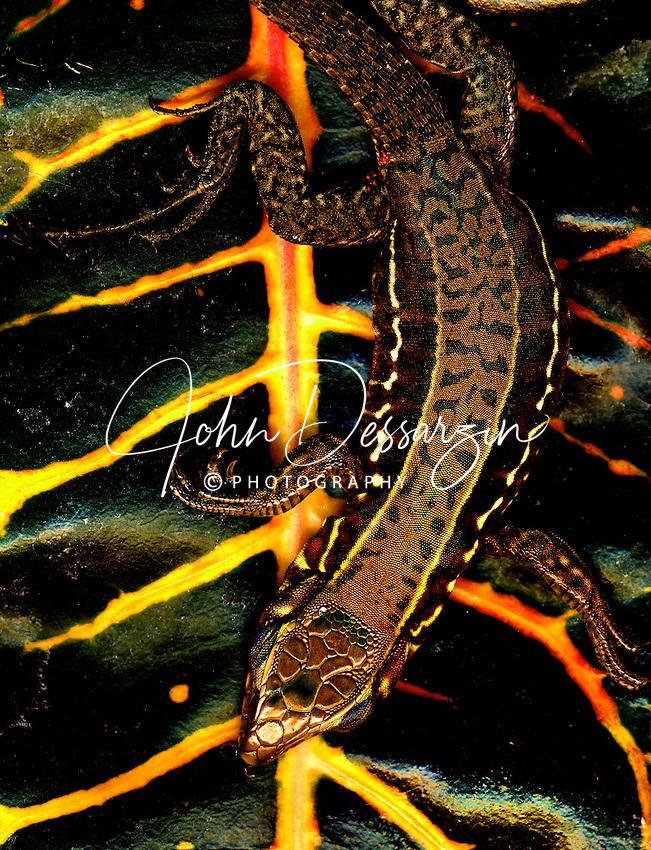 Gecko on Yellow & Black Leaf
