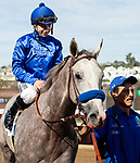 November 17, 2018: #2 Coliseum, ridden by Joseph Talamo, return to the connections after winning  race 1 on November 17, 2018, at Del Mar Thoroughbred Club in Del Mar, CA. ( Photo by Casey Phillips/Eclipse Sportswire/CSM)