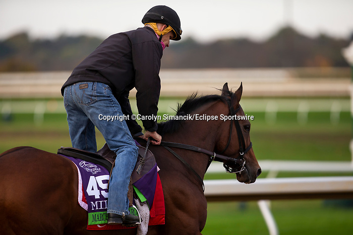 November 1, 2020: March To The Arch, trained by trainer Mark E. Casse, exercises in preparation for the Breeders' Cup Mile at Keeneland Racetrack in Lexington, Kentucky on November 1, 2020. Carolyn Simancik/Eclipse Sportswire/Breeders Cup