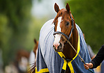 ARCADIA, CA - APRIL 02: Justify cools out at the barn after completing his final workout for the Santa Anita Derby at Santa Anita Park on April 02, 2018 in Arcadia, California. (Photo by Alex Evers/Eclipse Sportswire/Getty Images)