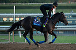 ARCADIA, CA  OCTOBER 25: Breeders' Cup Juvenile  entrant Eight Rings, trained by Bob Baffert, exercises in preparation for the Breeders' Cup World Championships at Santa Anita Park in Arcadia, California on October 25, 2019. (Photo by Casey Phillips/Eclipse Sportswire/CSM)