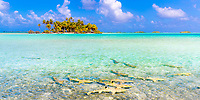 Blacktip reef sharks in the transparent lagoon, with a beautiful coconut tree motu, in Rangiroa atoll, Tuamotu French Polynesia, South Pacific Ocean