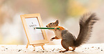 """Squirrels hold up tiny signs encouraging people to vote with the US election less than a week away.  The red squirrels hold letters, signs, and flags and even cast their own vote in a miniature ballot box.<br /> <br /> The props were made by photographer Geert Weggen, who also took the photos, to highlight the importance of the upcoming US Presidential election.  The 52 year old from Bispgården, Sweden, where the pictures were taken, said: """"The American election is a big deal.  SEE OUR COPY FOR DETAILS.<br /> <br /> Please byline: Geert Weggen/Solent News<br /> <br /> © Geert Weggen/Solent News & Photo Agency<br /> UK +44 (0) 2380 458800"""