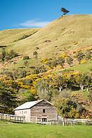 Farming shed on Otago Peninsula, Coastal Otago, East Coast, New Zealand