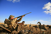 Waterfowl hunter shooting. Waterfowl hunting