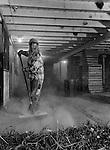 A young farmer sweeping garlic debris