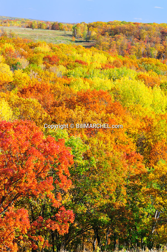 00440-010.13 Fall Color: Mix of mostly oak, aspen and birch are in peak of color.  Meadow in background. Mix of wildlife habitat. Brilliant, colorful.