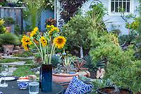 Vase of sunflowers on backyard patio table, California plant collector garden - Carol Brant