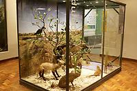 Campinas (SP)05/01/2020 - Museu - Fechado há um ano e cinco meses para obras de revitalização após acumular rachaduras e sinais de abandono, o Museu de História Natural de Campinas (SP) retoma as atividades a partir desta quarta-feira (6). O espaço, localizado dentro do Bosque dos Jequitibás, estava em reforma desde agosto de 2019.