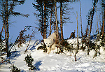 Polar bear cub, Churchill, Manitoba, Canada