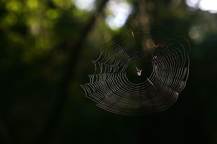 December 5, 2007; Santa Cruz, CA, USA; Detailed view of a spider in its web in Santa Cruz, CA. Photo by: Phillip Carter
