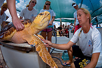 Volunteers at the Loggerhead Marine Life Center in Juno Beach, Florida, USA, Atlantic Ocean perpare to release a sub-adult Loggerhead Sea Turtle (Caretta caretta) after rehabilitation at the center, which focuses on rescuing sea turtles as well as educating the public on marine life conservation.