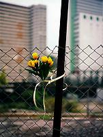 Flora, Tulpen, Plastikblumen, Zaun, trist, Hongkong, China, 2003, Hong Kong Flora<br /> <br /> <br /> Buchcover WerbungPR<br /> verlassen, traurig, Oede, Blume, Blumen, Hoffnung, einsam,<br />  ***Keine Social_Media Nutzung***<br /> <br /> Engl.: Asia, China, Hong Kong, urban flora, plant, flowers, fence<br /> ***No social media use***