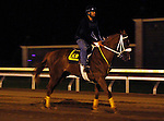 October 25, 2015:  Lady Shipman, trained by Kathleen O'Connell, and owned by Ranlo Investments, is entered in the Breeder's Cup Turf Sprint.  Candice Chavez/ESW/CSM