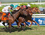 February 27, 2021:  Got Stormy #2, ridden by Tyler Gaffalione, wins the Honey Fox Stakes (Grade 3) on the turf on Fountain of Youth Day at Gulfstream Park in Hallandale Beach, Florida. Liz Lamont/Eclipse Sportswire/CSM