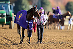 November 7, 2020 : Order of Australia, ridden by Pierre-Charles Boudot, wins the FanDuel Mile presented by PDJF on Breeders' Cup Championship Saturday at Keeneland Race Course in Lexington, Kentucky on November 7, 2020. Wendy Wooley/Breeders' Cup/Eclipse Sportswire/CSM