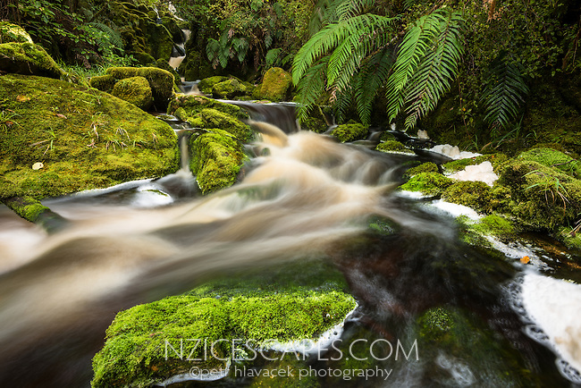 Forest stream in Oparara Valley, West Coast, Buller Region, Kahurangi National Park, New Zealand