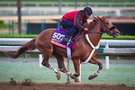 ARCADIA, CA - OCTOBER 29: Mind Your Biscuits works in preparation for the Breeders' Cup Sprint at Santa Anita Park on October 29, 2016 in Arcadia, California. (Photo by Zoe Metz/Eclipse Sportswire/Getty Images)