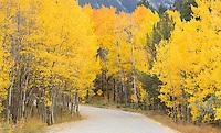 Fall scene near Buena Vista