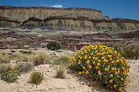 The colorful and unusual sandstone rock formations along Caineville Mesa in Southern Utah