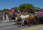 2018 Rodeo Cattle Drive