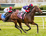 NOVEMBER 24, 2018 : White Flag, ridden by David Cohen, wins the Aqueduct Turf Sprint Championship Stakes at Aqueduct Racetrack on November 24, 2018 in South Ozone, NY.  Sue Kawczynski/ESW/CSM