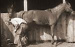 Horses- Care
