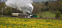 02/05/16 <br /> <br /> On a wet and windy Bank Holiday Monday steam engine 'Whiston' passes below a field of golden dandelions, running along the Foxfield Railway Line near Stoke in Staffordshire,<br /> <br /> The Hunslet Austerity 0-6-0 saddle tank was built by The Hunslet Engine Company of Leeds.<br />   <br /> It is one of 485 locomotives, the first one being completed on New Year's Day, January 1943 with the last built in 1964.<br /> <br /> The Foxfield Railway was built in 1892 to provide a link to the national railway network for the Foxfield Colliery, on the Stoke-Derby main line. <br /> <br /> All Rights Reserved: F Stop Press Ltd. +44(0)1335 418365   +44 (0)7765 242650 www.fstoppress.com