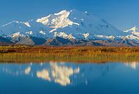North Face Of 20, 3020+ Ft. Mt. Denali  Tundra And Reflection In Tundra Pond, Denali National Park, Alaska.