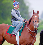 Animal Kingdom (left), winner of the 137th Kentucky Derby, heads to the training track through a morning mist as he continues to train for the Preakness at the Fair Hill Training Center on May 14, 2011 in Fair Hill, Maryland.
