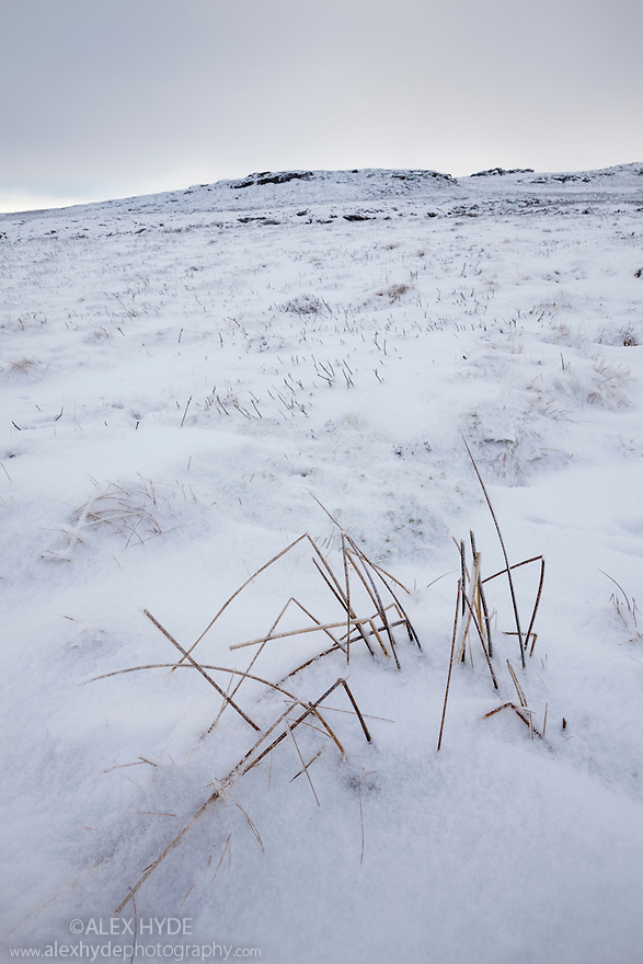Heather moorland in winter, below Back Tor, Derwent Edge, Peak District National Park, UK. January.