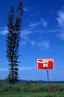 Araucaria pines tree and a basket ball hoop with sea in the background, Efate Island, Vanuatu.