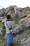 Wildlife photographer and mountain goat on Mount Evans (14250 feet), Rocky Mountains, west of Denver, Colorado. .  John leads private, wildlife photo tours throughout Colorado. Year-round. .  John leads private photo tours in Boulder and throughout Colorado. Year-round.