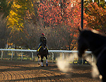 November 2, 2020: Higher Power, trained by trainer John W. Sadler, exercises in preparation for the Breeders' Cup Classic at Keeneland Racetrack in Lexington, Kentucky on November 2, 2020. Carolyn Simancik/Eclipse Sportswire/Breeders Cup