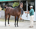 11 September 2010.  Hip #85  Smart Strike - Pretty Dutch colt, consigned by Lane's End.