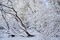 Winterwald, Bäume mit verschneiten Ästen, Winter, Schnee, Winterlandschaft, Winterstimmung, winterlich, eisig, kalt, Schleswig-Holstein, Deutschland, snow