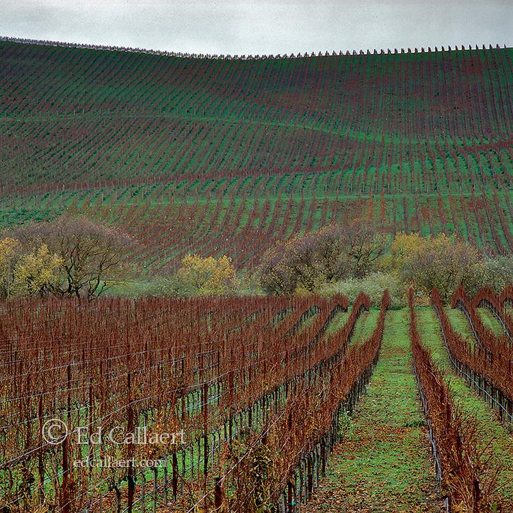 Winter Vineyards, Carneros Appellation, Napa Valley, CA
