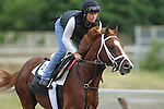 June 5, 2015: Belmont Stakes contender Madefromlucky, trained by Todd Pletcher, gallops at Belmont Park, Elmont, NY. Joan Fairman Kanes/ESW/CSM