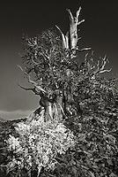 Landscapes: black and white images