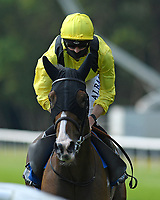 Salayel ridden by Jack Mitchell goes down to the start of The AJN Steelstock Steel Processors British EBF Fillies' Handicap   during Horse Racing at Salisbury Racecourse on 9th August 2020