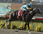 August 8, 2008.Zensational ridden by Victor Espinoza, wins the Bing Crosby Stakes at Del Mar Throughtbred Club, Del Mar, CA