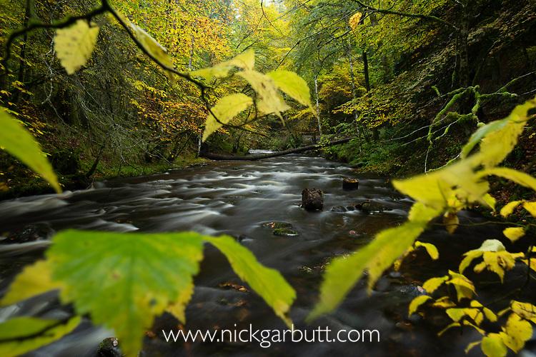 Flowing stream and autumn woodland. Caledonian forest, Reilig Glen, Scottish Highlands. Scotland. October.