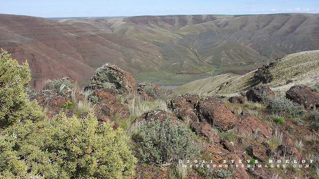 Juniper and boulders on a ridge overlooking the John Day River Canyon.