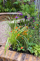 Raised bed patio garden with ornamental grasses, cosmos, irises, columbine, in late spring  or early summer garden