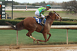 HOT SPRINGS, AR - FEBRUARY 19: Hawaakom #3, with Corey Lanerie aboard after crossing the finish line in the Razorback Handicap at Oaklawn Park on February 19, 2018 in Hot Springs, Arkansas. (Photo by Justin Manning/Eclipse Sportswire/Getty Images)