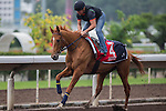 DEC 12,2015: Gailo Chop ,trained by Antoine de Watrigant,exercises in preparation for the Hong Kong Cup at Sha Tin in New Territories,Hong Kong. Kazushi Ishida/ESW/CSM
