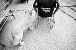 BEACON, NEW YORK:  Ed trains Midas to get him used to working with someone in a wheelchair during class for the Puppies Behind Bars (PPB) program at Fishkill Correctional Facility. The program prepares puppies to be service dogs and consists of one day of class a week on topics such as obedience training, grooming, basic care of the dogs. The rest of the week prisoners keep the dogs with them as they go about their daily routine in the prison and train them on their own.