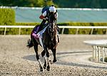 January 24, 2020: Instilled Regard gallops as horses prepare for the Pegasus World Cup Invitational at Gulfstream Park Race Track in Hallandale Beach, Florida. Scott Serio/Eclipse Sportswire/CSM